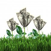 stock photo of jade blue  - Bush of dollar bills on the green grass against the blue sky - JPG