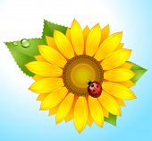 vector sunflower with ladybird on sky