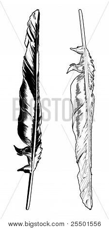 Crow Feather