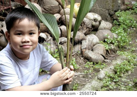 Child Holding A Coconut Seedling