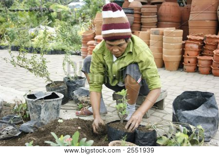 Old Lady Planting