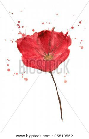 Painted watercolor poppy flower, VECTOR