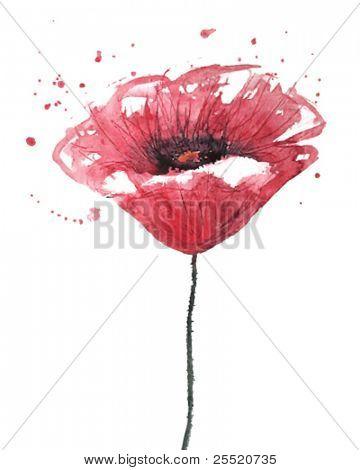 Poppy flower, watercolor, VECTOR