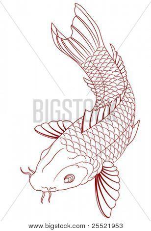 vector carp