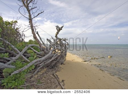 Cayman Islands Drift Wood On The Beach