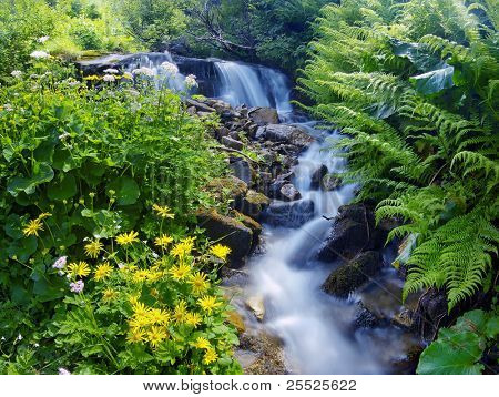 Yellow flowers and green plants near a mountain stream. Spring.