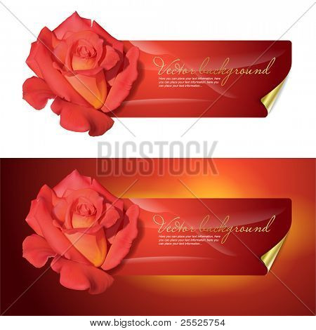 Vector background for design with a red rose.
