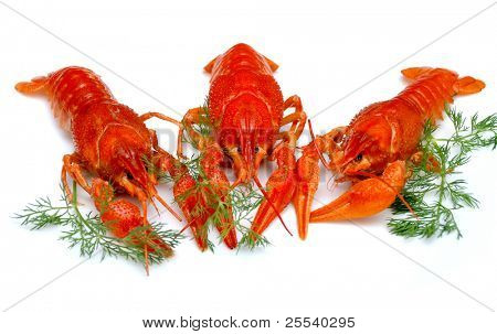 ?ooked crayfish, russian delicacy for beer