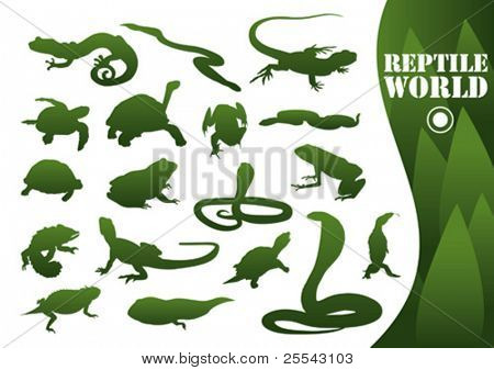 Reptile silhouettes isolated on white. Vector illustration.