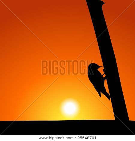 Woodpecker Silhouette At Sunset