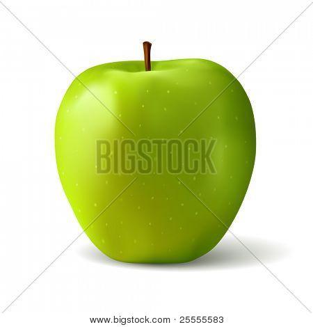 Realistic green apple vector illustration (gradient mesh)