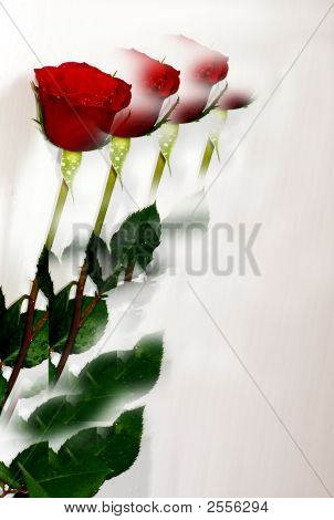 Treble Red Rose