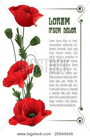 Poppies. Wonderful vector background.