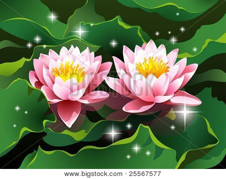 high quality detailed lotus flowers with reflection on black and white abstract oriental backgrounds (JPG version)