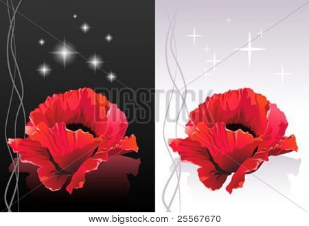 Spa illustration - Red poppy flower heads floating on a surface with reflection - isolated on black and white