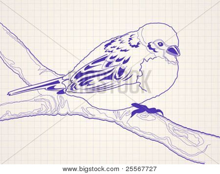 Hand drawn sparrow bird sitting on a branch - ballpoint pen drawing on a squared paper in a notebook or diary. High quality detailed illustration. For teens or kids products.