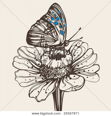 Hand drawn butterfly on a flower - High quality elegant realistic drawing