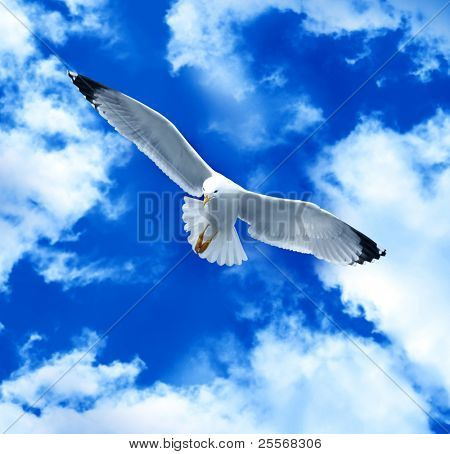Sea gull in a blue sky