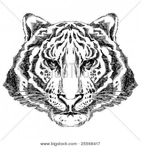 Tiger drawing  - for VECTOR version please visit my portfolio