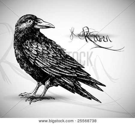Raven dibujo vectorial de alta calidad