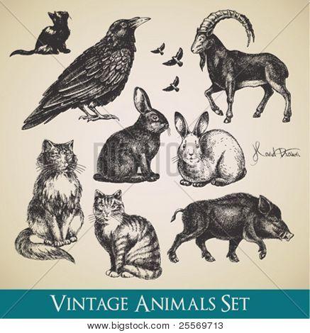 Vector animales juego - raven, gatos, vuelo de aves, conejos, jabalí, cabra