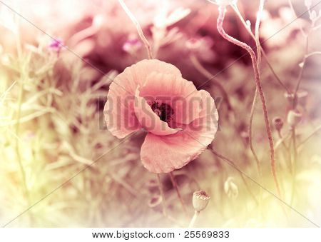 Poppy Flower Vintage Card