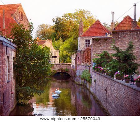 Beautiful view of a canal and white swans, bridge, red roofs in Bruges, Belgium