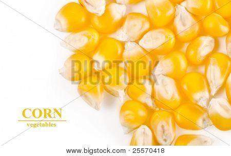 grain corn closeup on a white background