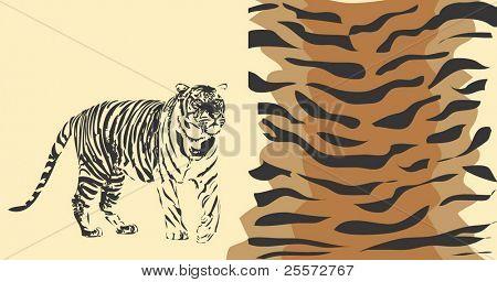 Fundo do tigre