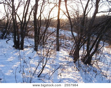 Solar Winter Wood