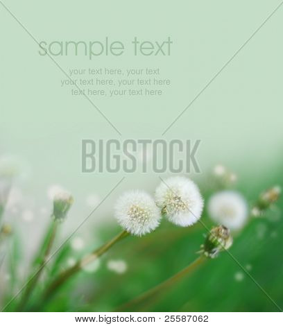 card with dandelion and text