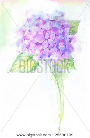 Pintado de acuarela Hortensia flor