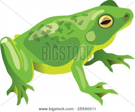 Vector illustration of a sitting green frog