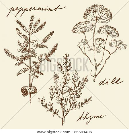 hand drawn herbs