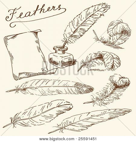 hand drawn feathers