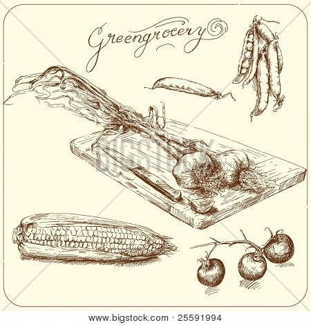 greengrocery - hand drawn vegetable