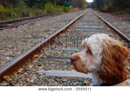 Dog On Railroad Track