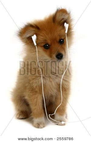 Puppy With Mp3 Headphones