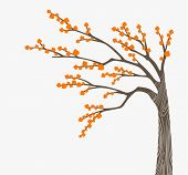image of fall trees  - A vector illustration of an autumn tree - JPG