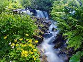 Постер, плакат: Желтые цветы и зеленые растения недалеко от горного ручья Весна
