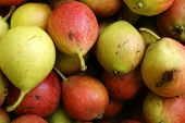 Background From Ripe Fruit Pear.ripe Fruits Pear Harvest poster