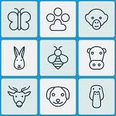 Zoology Icons Set With Dog, Bee, Paw And Other Moose Elements. Isolated  Illustration Zoology Icons. poster