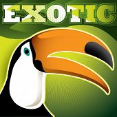 stock photo of polly  - Designed exotic banner with toucan - JPG