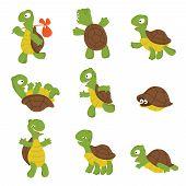 Cartoon Turtle. Cute Tortoise Wild Animal Vector Characters Isolated. Turtle Wildlife, Terrapin Wild poster