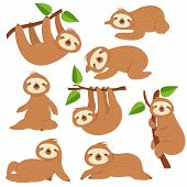Cartoon Sloths. Cute Sloth Hanging On Branch In Amazon Rainforest. Lazy Jungle Animal Vector Charact poster