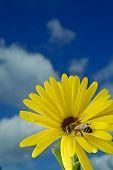 stock photo of yellow flower  - close - JPG