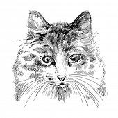 cat drawing vector
