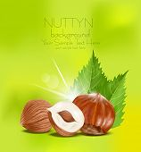 foto of hazelnut tree  - vector hazelnut kernels with the leaves on a green background - JPG