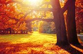 Fall Trees In Sunny October Park Lit By Evening Sunshine. Colorful Fall Landscape With Sunbeams Brea poster