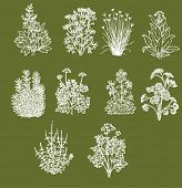 picture of aromatic  - Set of ten most popular aromatic cooking herbs - JPG